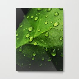 Droplets on Ivy Metal Print