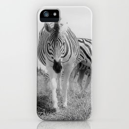 Grazing Zebras iPhone Case