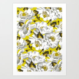 Mount Cook Lily - Yellow/White Art Print