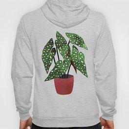 Begonia maculata pot watercolor Hoody