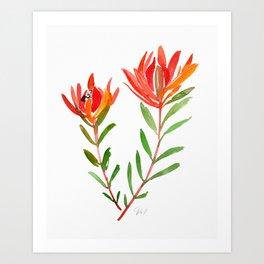 Safari Sunset - Conebush Art Print