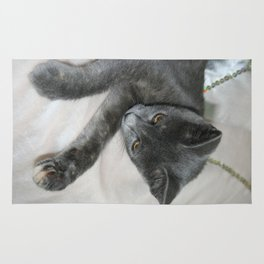 Cute Grey Kitten Relaxing  Rug