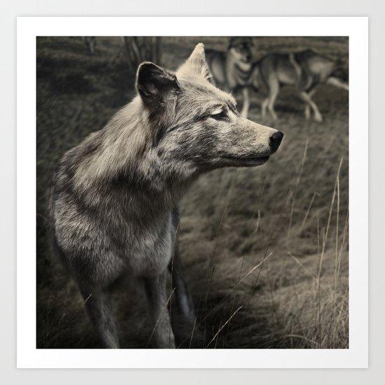 Tom Feiler Wolf Art Print