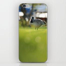 Canadian goose iPhone Skin