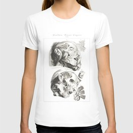 Human Anatomy Art Print HEAD MUSCLE FACE Vintage Anatomy, doctor medical art, Antique Book Plate, Me T-shirt