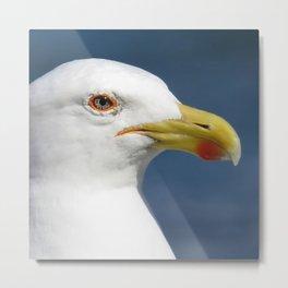 Seagull up close Metal Print