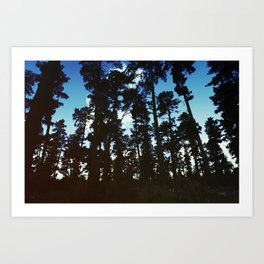 Tree Silhouettes Art Print