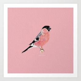 Siberian Bullfinch (rose palette) Art Print