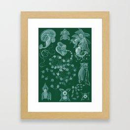 Ernst Haeckel Siphonophorae Hydrozoan Framed Art Print