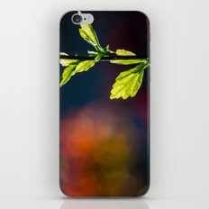 Leaves in a colorful world iPhone & iPod Skin