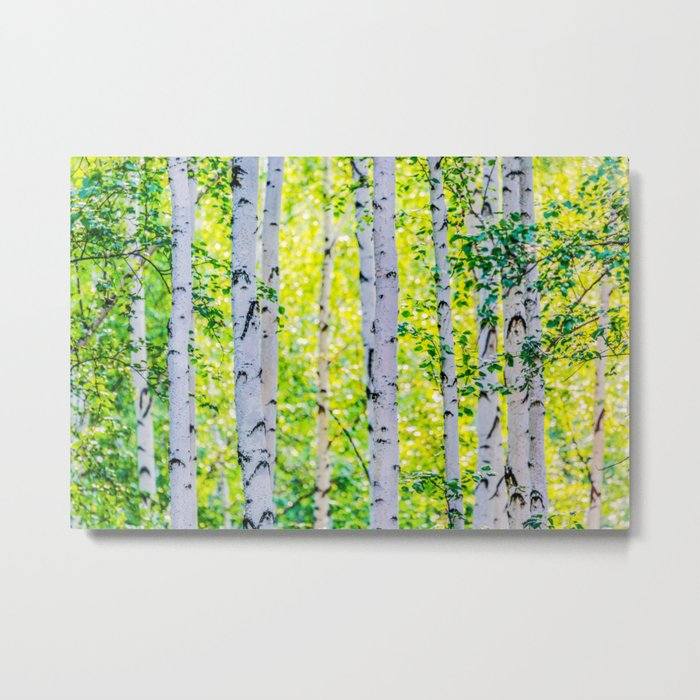 Birch Grove Metal Print
