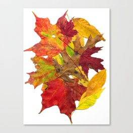 Autumn Fall Leaves Foliage Art Canvas Print