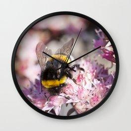 Bumblebee On Stonecrop – Hummel auf Fetthenne Wall Clock