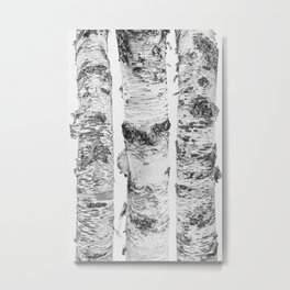 Birch Trees Landscape Photography   Black and White   black-and-white   bw Metal Print