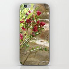 flowering vines iPhone & iPod Skin
