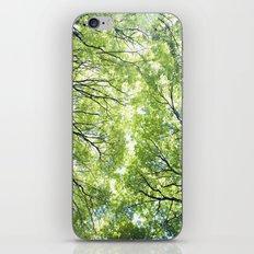 Green Maples iPhone & iPod Skin