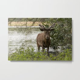 An Evening Swim Metal Print