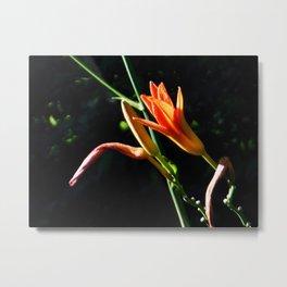 Orange Daylilies Shines Metal Print