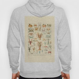 Sea Creatures // Crustaces by Adolphe Millot 19th Century Science Textbook Diagram Artwork Hoody