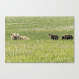 Mother Brown Bear With Her Two Cubs, No. 2 Canvas Print