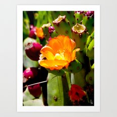 Orange Cactus Blossom Art Print