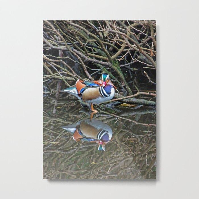 Mandarin Duck Reflection Metal Print