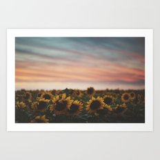 Oahu's Sunflowers Art Print