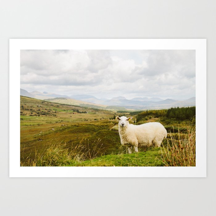 A sheep in the Irish hills Kunstdrucke