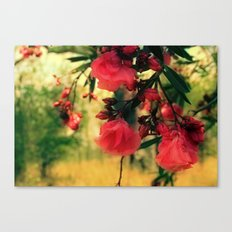A promise of sweet softness Canvas Print