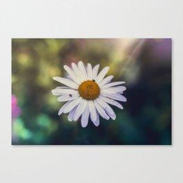Daisy III Canvas Print
