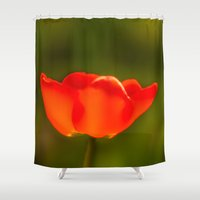tulip Shower Curtains featuring Tulip by Bruce Stanfield