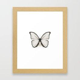 Mono Morpho Butterfly Framed Art Print