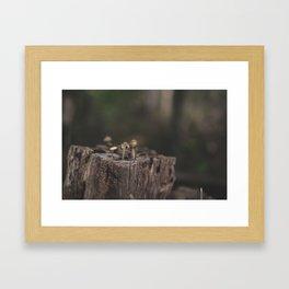 Tiny Mushrooms Framed Art Print