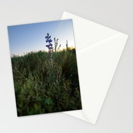 Purple Flowers - Nature Photography Stationery Cards