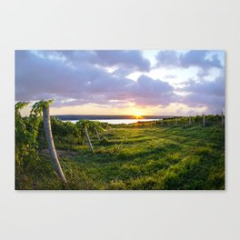 Seneca Lake Vineyard Canvas Print