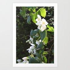 Spring Glow Art Print