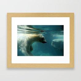 Peaceful Polar Bear Framed Art Print
