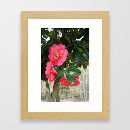 camellia flower Framed Art Print