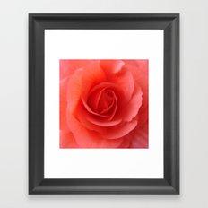 Rose Delicate Framed Art Print