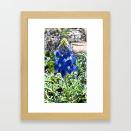 Just A Touch of Blue Framed Art Print