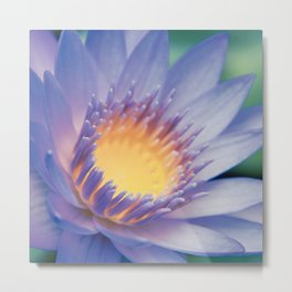 He makana nau Ke Aloha - Nymphaea stellata  - Star Lotus Metal Print