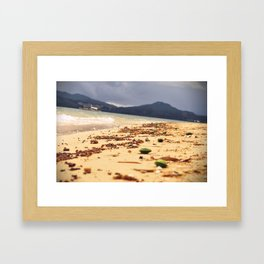 Cowry Framed Art Print