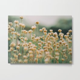 Vintage Chamomile Wildflowers Metal Print