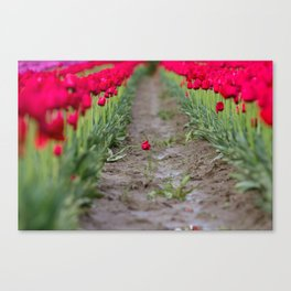 A Field of Red Tulips Canvas Print