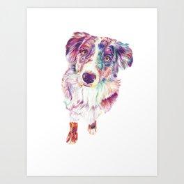 Multicolored Australian Shepherd red merle herding dog Art Print