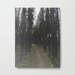 Tree Tunnel Metal Print