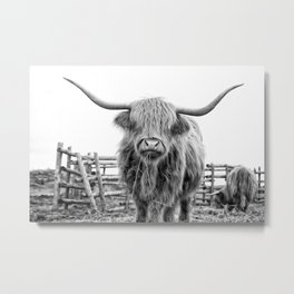 Highland Cow in a Fence Black and White Metal Print