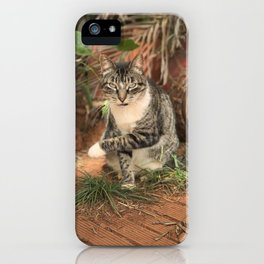 Gruff Kitty (Lanai Cat Sanctuary) iPhone Case