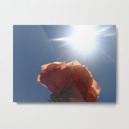 Translucent Rose II Metal Print
