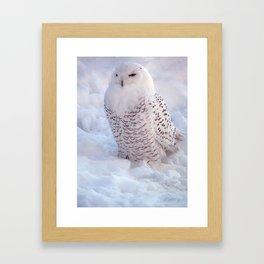 Harfang des neiges Framed Art Print